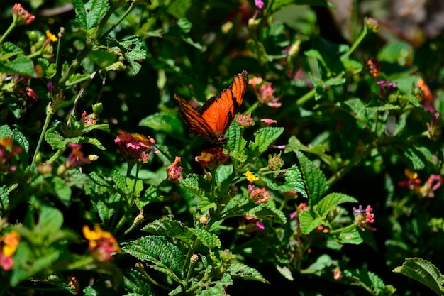 かわいい蝶カラフルな動物着陸
