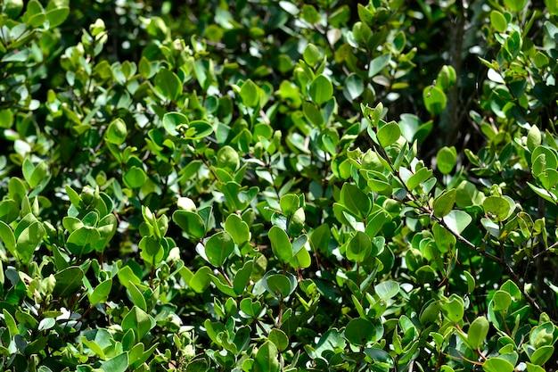 きれいな緑の低木ライフ自然