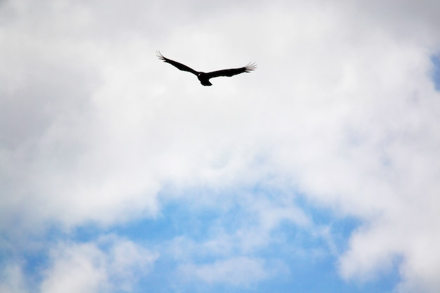 カラフルな高さが空を飛んでリラックス