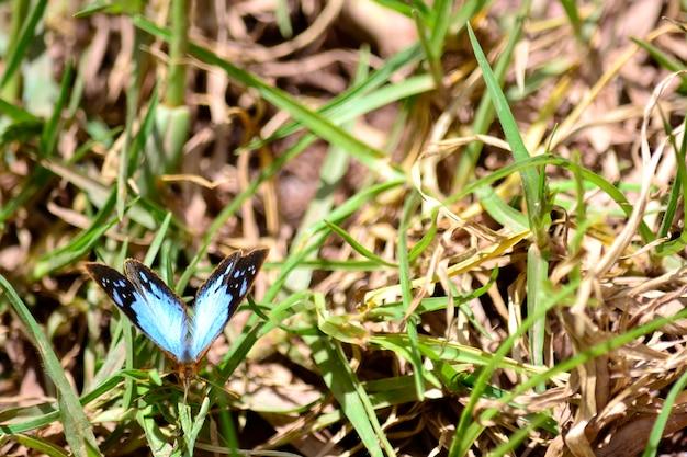 カラフルなかわいい美しい蝶草
