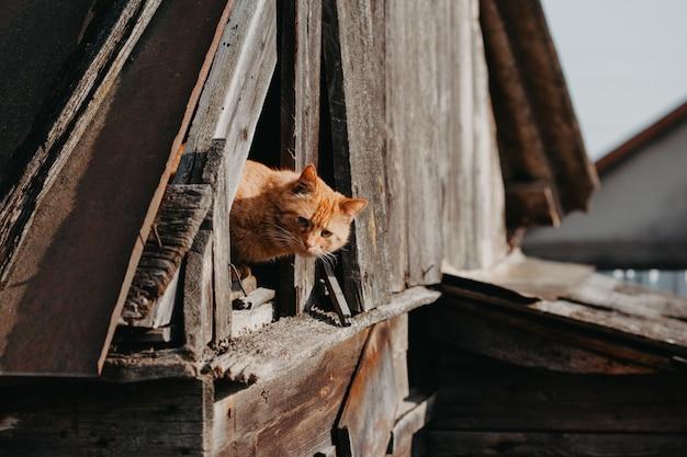 面白い赤猫屋外