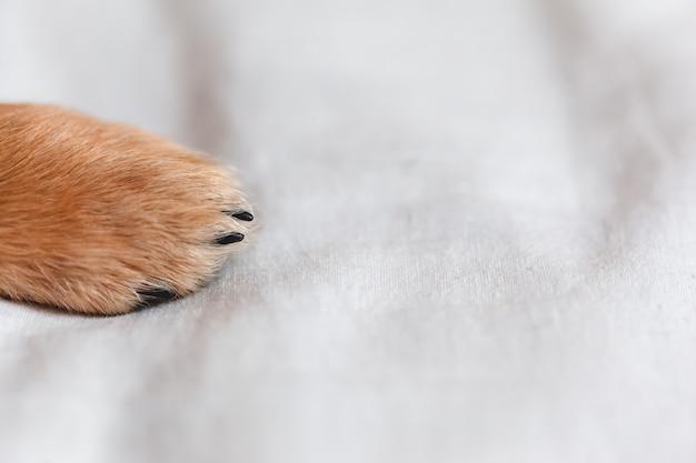 犬の足をクローズアップ