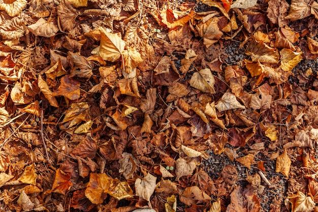 Осенний лист фон