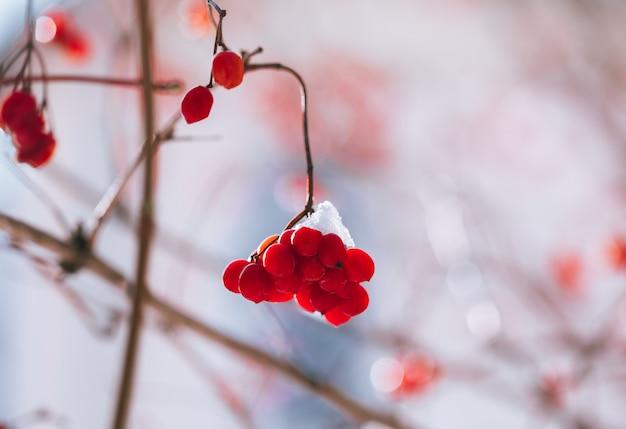 雪のナナカマドの果実