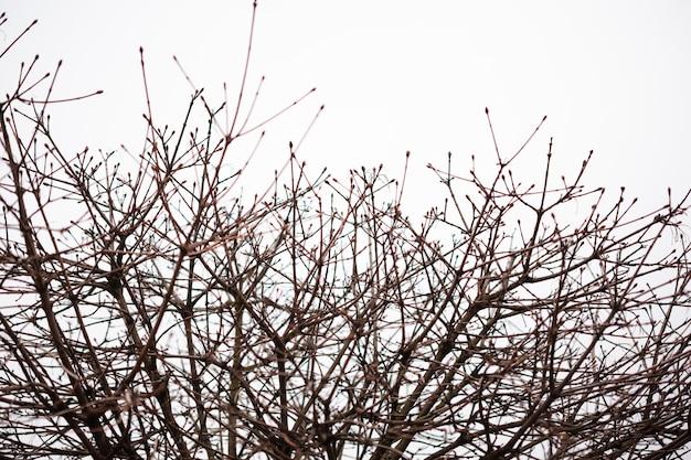 Дерево вырисовывается на фоне серого неба