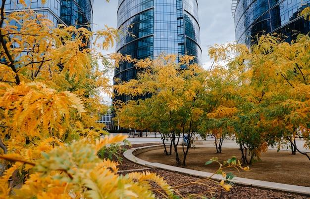 Осенняя акация на городской площади
