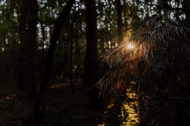 Красивый восход солнца в осеннем лесу