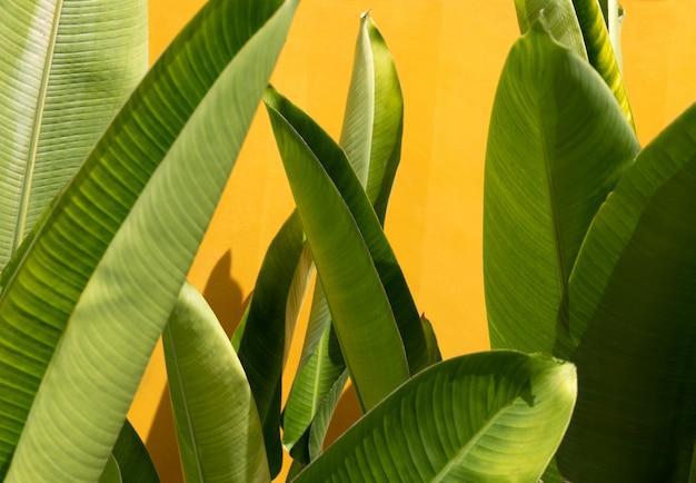 黄色の壁の近くのエキゾチックな熱帯の緑の葉