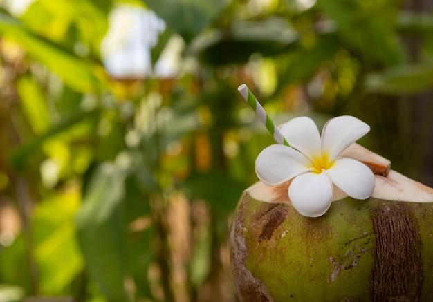 熱帯の新鮮なココナッツカクテルの装飾が施されたプルメリアの花屋外