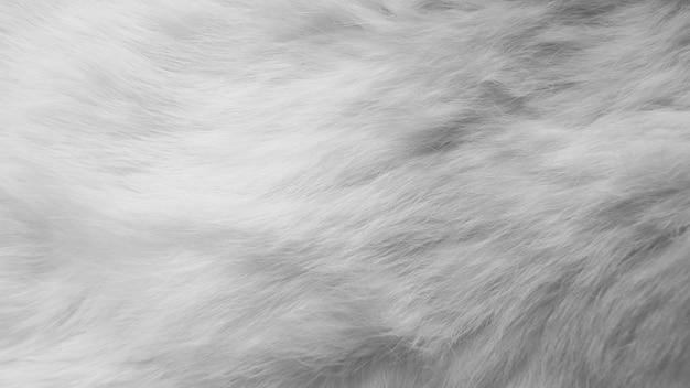 白い絹の羽。ウール、白うさぎ肌
