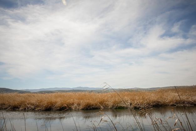 Водно-болотные угодья с болотной растительностью на маршруте мамонт в падуле, гранада, андалусия, испания