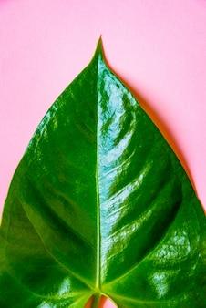 Взгляд сверху зеленых лист на пинке.