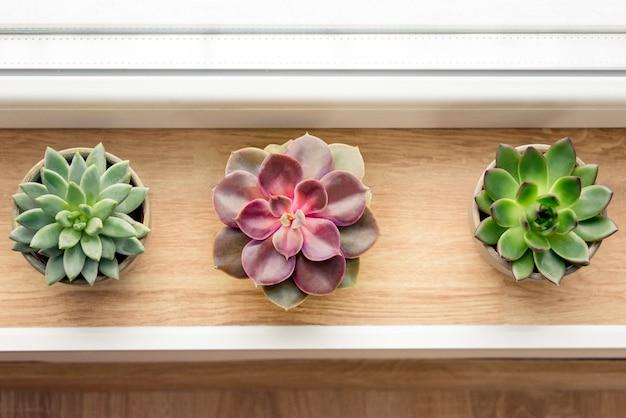 Различные суккулентные растения расположены у окна.
