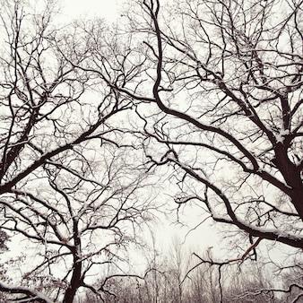 葉のない雪の木のクローズアップ