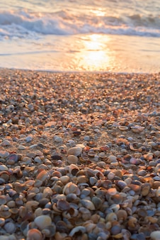 ビーチで貝殻。
