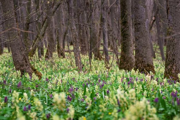 Весенний цветущий сад. желтый и фиолетовый первые цветы. подснежники
