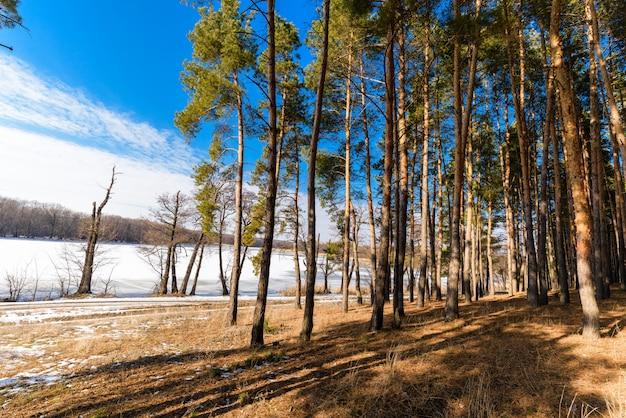 Лес, освещенный солнцем