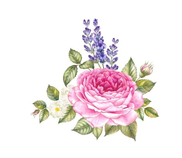 Цветущая роза акварельные иллюстрации.