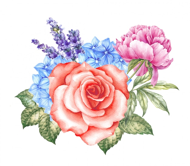 咲くバラの水彩イラスト。