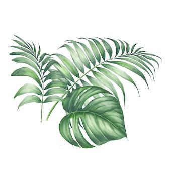 Тропические пальмовые листья.