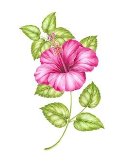 熱帯の水彩イラスト。