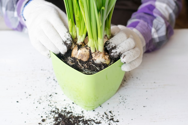 Посадка цветов в горшок, руки крупным планом.