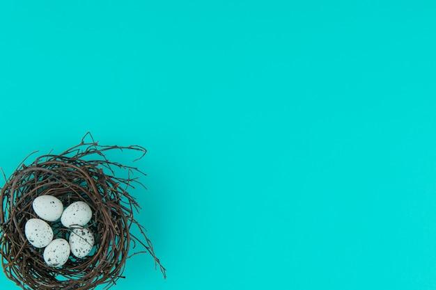 青の卵と自然の巣