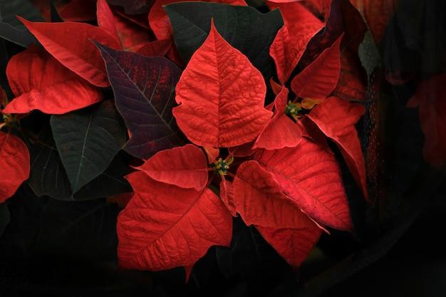 赤い葉の花