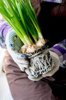 Садовник держит в руках цветок с корнями.