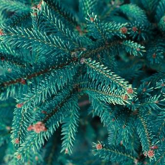 自然な針葉樹のクリスマスツリー