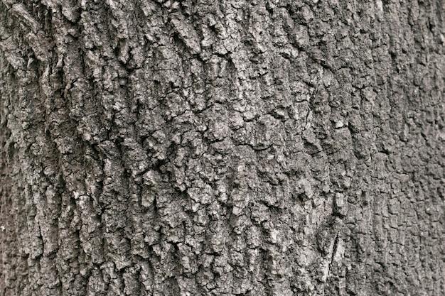 Текстура сухого старого дерева, кора.