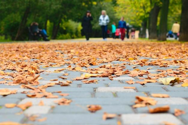 秋の公園の風景。足の下の乾燥した葉。セレクティブフォーカス