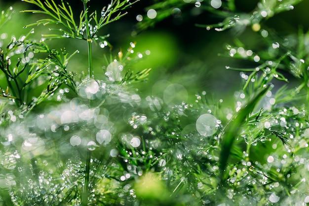 美しいボケ味を持つ抽象(デフォーカス、ぼやけ)自然花緑植物、草の上の露