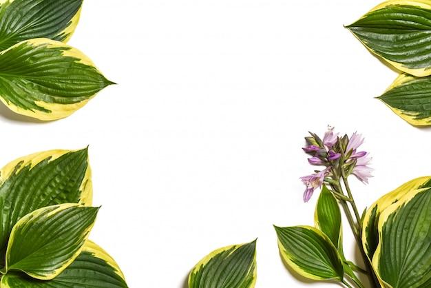 白で隔離される緑の葉のフレーム