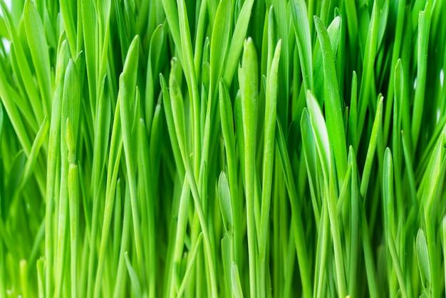 Зеленая свежая трава