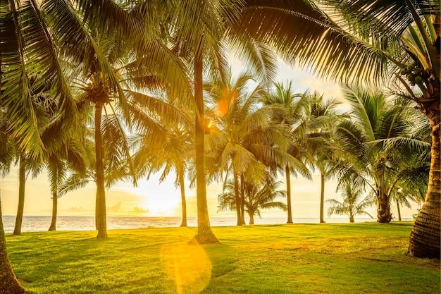 Зеленый газон с пальмами у моря, тропический пейзаж