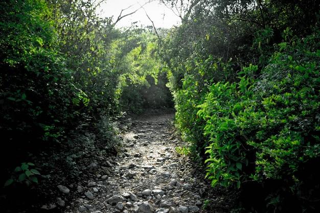 Впереди листовые лесные ландшафтные пути