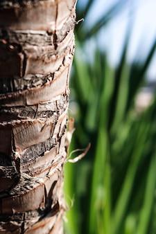 木の幹のテクスチャ