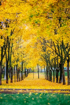 Осенний пейзаж в парке в москве