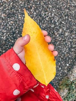 Лист осени держали рукой младенца на предпосылке асфальта.