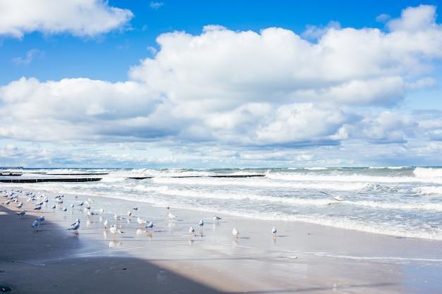 青い海の白い砂とカモメとバルト海のビーチ風景。晴れた秋の日。
