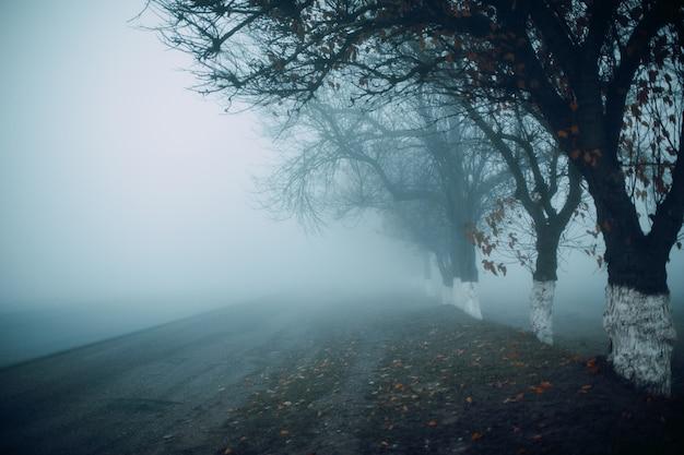 秋の早朝の霧の道。木のシルエット。
