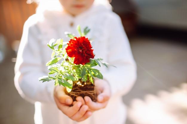 ポットが彼女の裏庭に滞在せずにマリーゴールドの花を保持している小さな女の子
