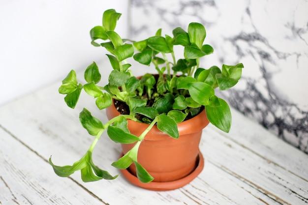 家の植物のインテリア