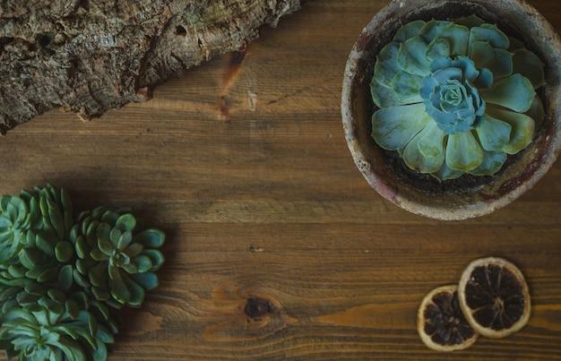 緑の植物、ポットの中のサボテン型の多肉植物の花