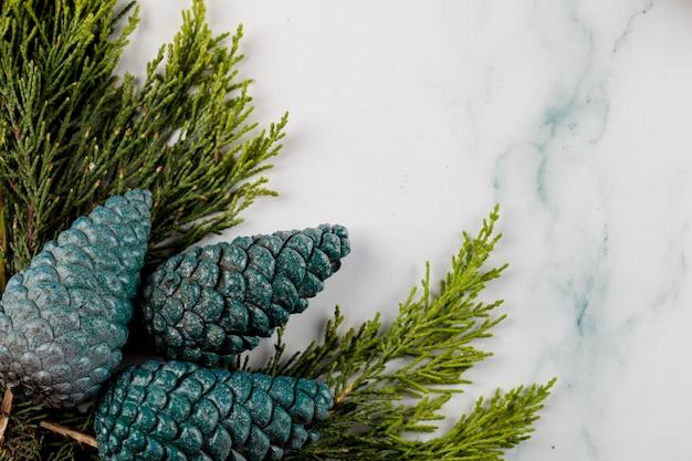Голубые серебряные конусы дуба на зеленой ветви в углу.