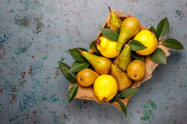 Свежие органические фрукты фермы, груши, айва, вид сверху