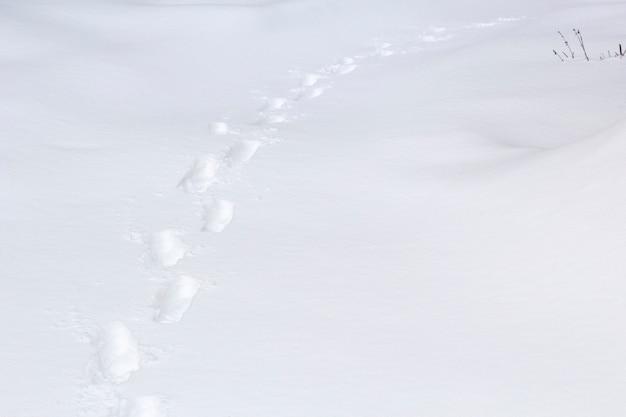 冬の雪の中の人間の足跡。