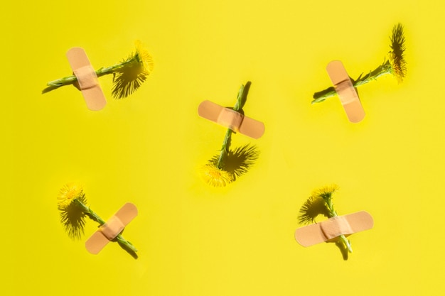 絆創膏の下で新鮮なフキタンポポ花の抽象的なパターン