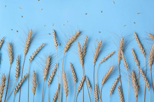 黄金の小麦とライ麦の耳、光の乾燥した穀物の穂